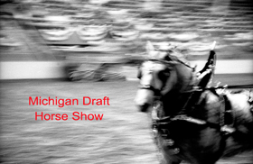 Michigan Draft horse show